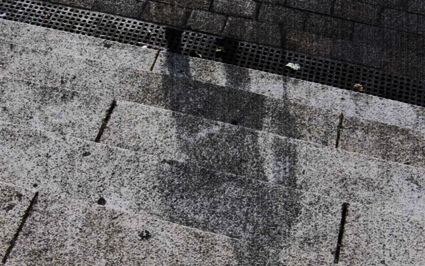 resti ombra di anime perite nel nulla dell'olocausto nucleare