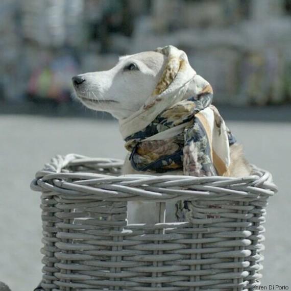 Bea , il cane cardiopatico di Maria nel film